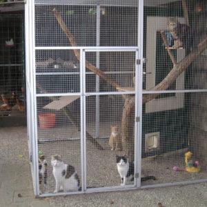 #006 Katten ren 200 x 200 x 200 cm